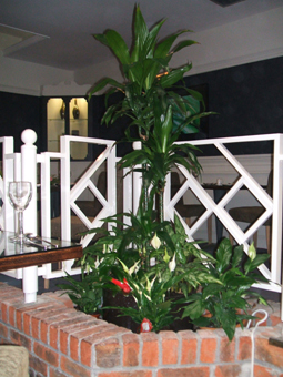 interior landscaping office. Perfect Landscaping Office Plants U003e Page 1 In Interior Landscaping